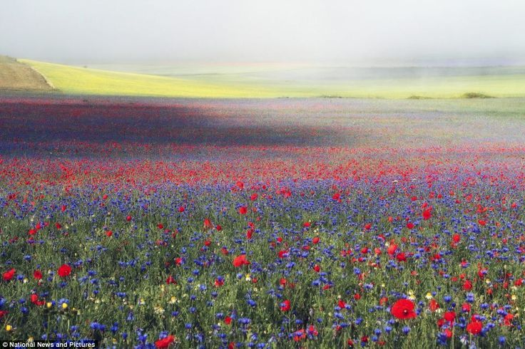 Dazzling images from the International Garden Photographer
