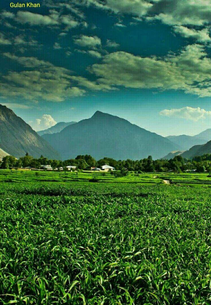 So fantastic lush green harvest field's beautiful village in Hindu Kush mountains Chitral Khyber Pakhtunkhwa Pakistan