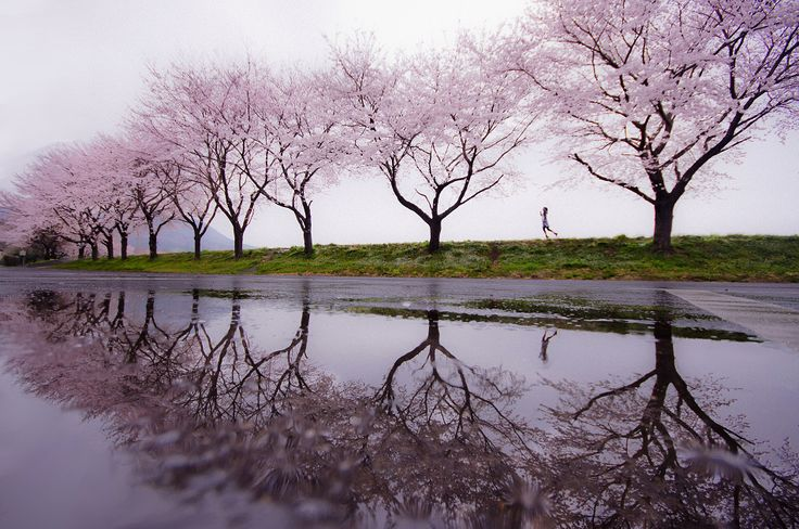 blossom: Reflection, Nature, Beautiful, Trees, Landscape, Spring, Photography
