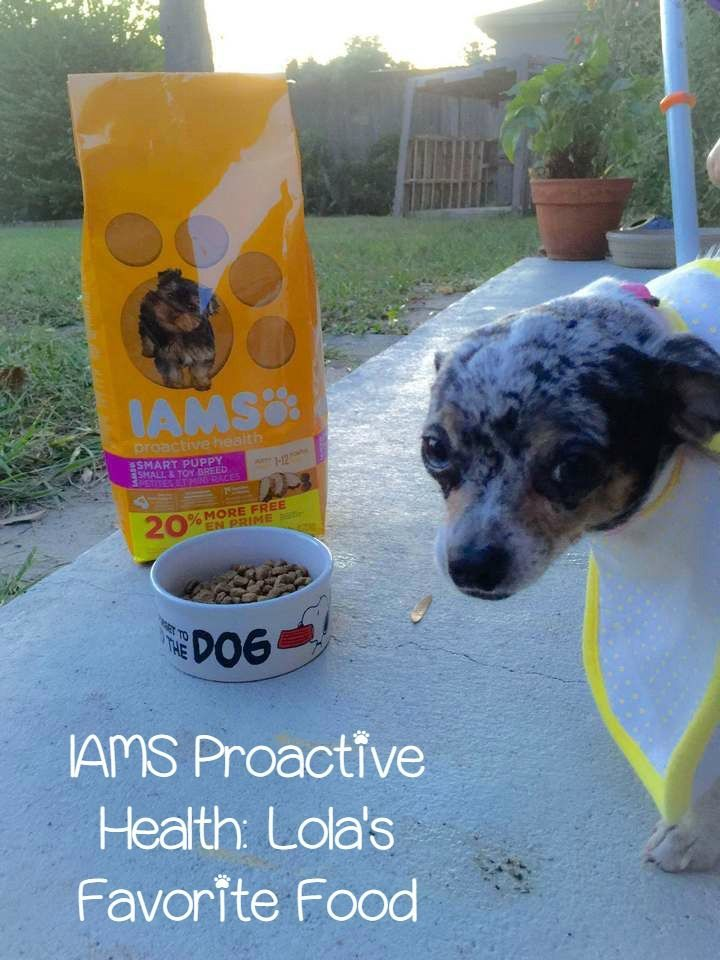 Join Lola on an adventure to hunt down her favorite food, IAMS Proactive Health, and discover why I'm always happy to give it to her! #FurryFoodie #ad