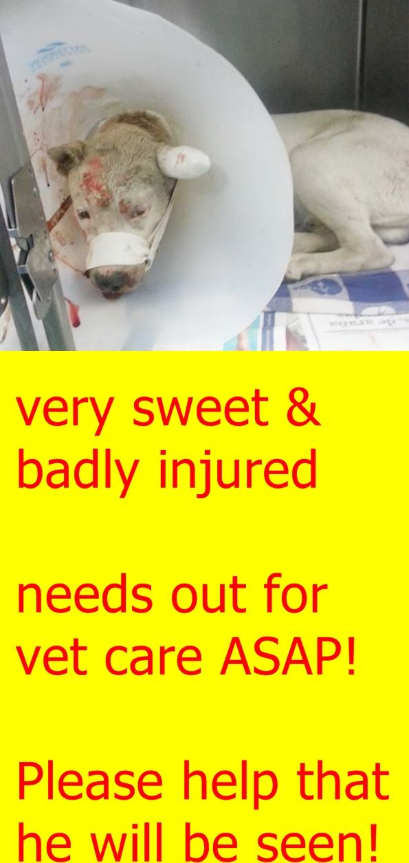 A1689897 needs help. Bleeding from nose/ mouth , jaw fracture, but dog able to eat. Very sweet dog!!!!!! SUN Program Category D-2!!!! Miami Dade https://www.facebook.com/urgentdogsofmiami/photos/pb.191859757515102.-2207520000.1428150796./956022117765525/?type=3&theater