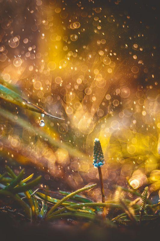 персонажи фотогалереи золотой дождь дверь раздался стук