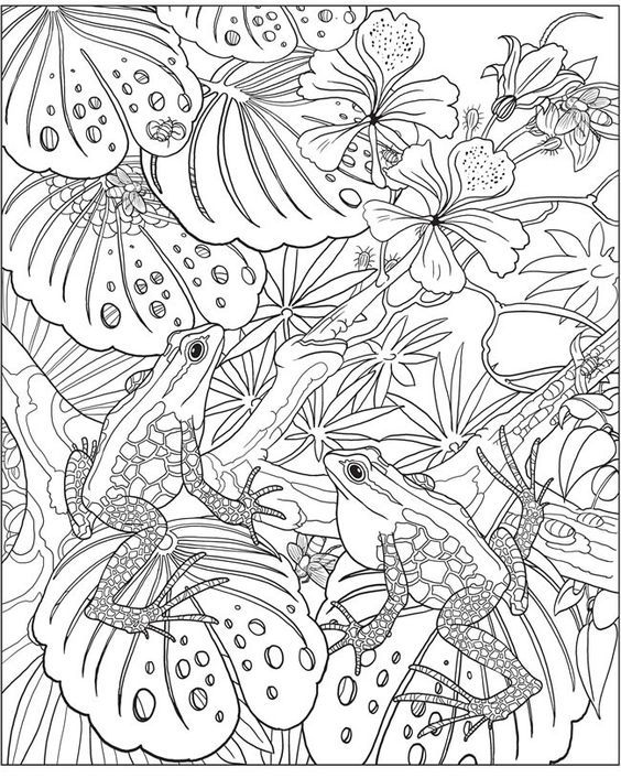 327 best Hojas para Colorear Adultos images on Pinterest | Colouring ...