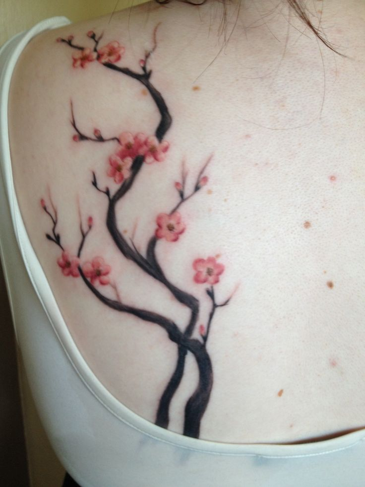 42 best images about cherry blossom on pinterest cherry blossom tree japanese flower tattoo. Black Bedroom Furniture Sets. Home Design Ideas