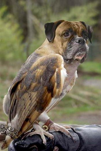 www.health-gossip.com Lol what a funny combination dog and eagle.. dogigle .. lmao #dogigle #funny #images