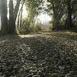 Un rincon del soto de Candespina, a ras de suelo, sobre la alfombra de hojas de álamo blanco, entre dos luces .. respirando esa fragancia de bosque húmedo, olor a hongos y silencios flotando en el aire.