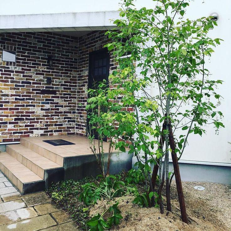 お客様から植え替えのご依頼があり工事をさせて頂きました玄関前にシンボルツリーのツリバナマユミを植えましたつりさがる実もとても可愛く秋には紅葉もします とても素敵になりましたありがとうございます #シンボルツリー#ツリバナマユミ#落葉樹#pin#フローラ#植栽工事