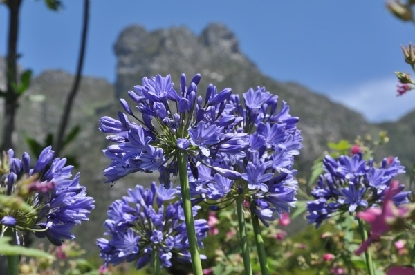 Kirstenbosch National Botanical Garden in South Africa