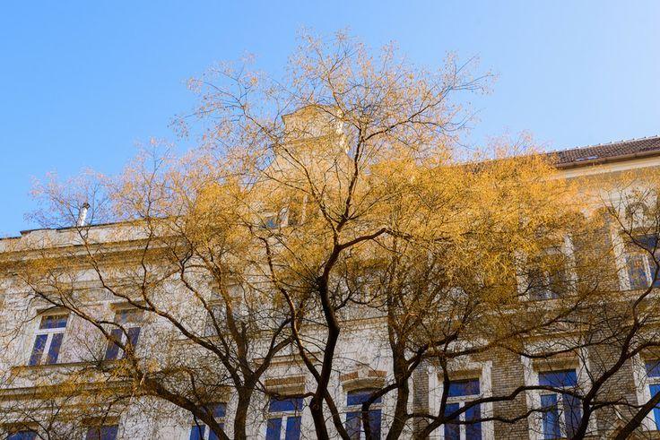 Spring in Vienna by Lari Huttunen on 500px