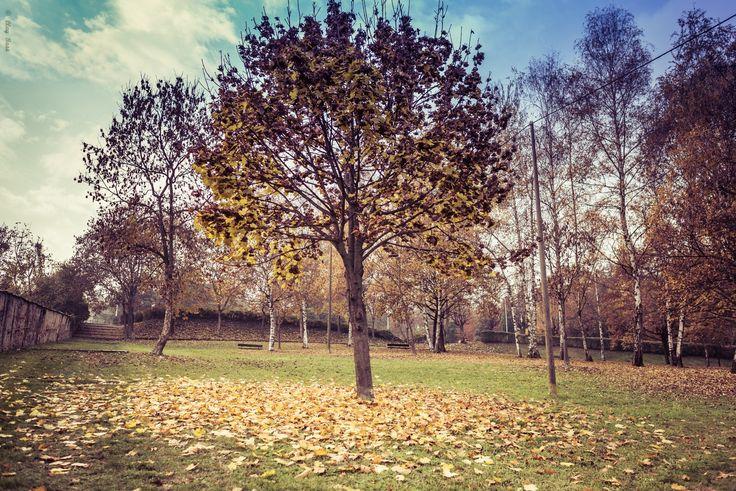 l'autunno che urla - c'è qualcosa di violento nell'autunno...