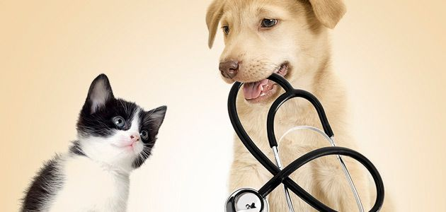 The American Animal Hospital Association, many links to different resources and about different illnesses that can affect your pets