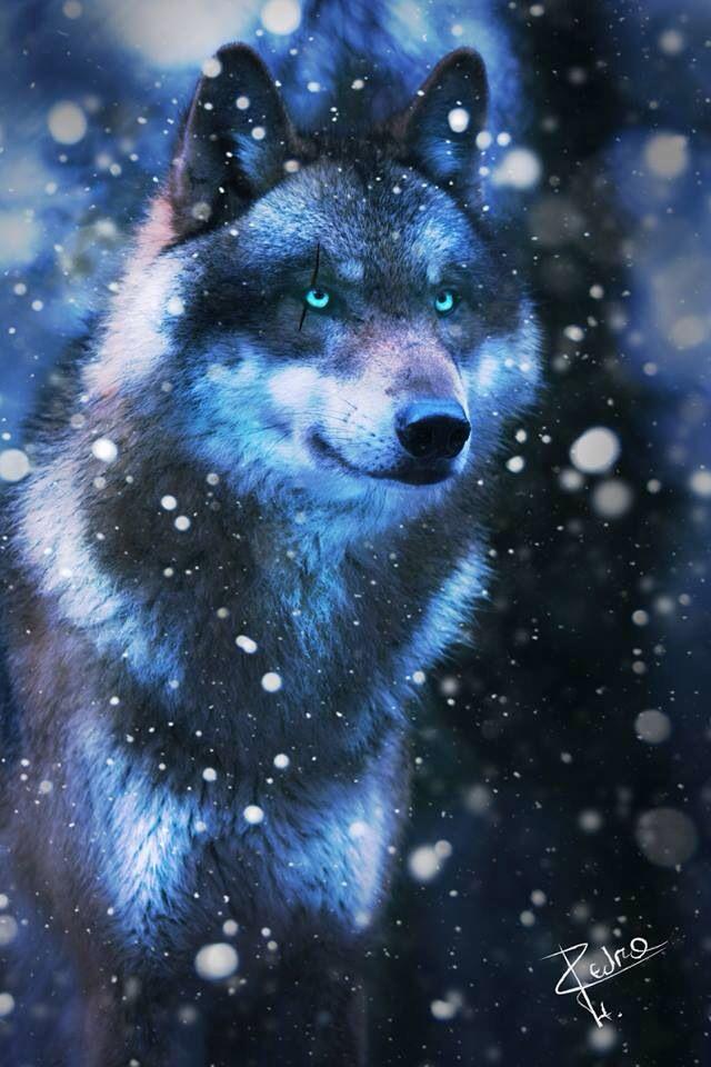 волк с синими глазами картинки