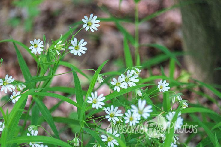 82-awesomefreephotos-flowers-forest-spring-nature-750
