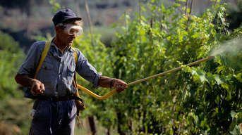 Poznáte špecifiká postrekov viniča? Odborník vám poradí
