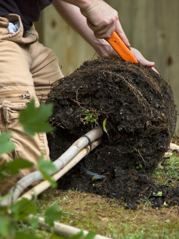 How to Plant a Tree   The Garden Glove