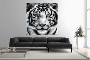 Interior :: Obraz szklany dekoracyjny White Tiger 80x80cm (Z30130)