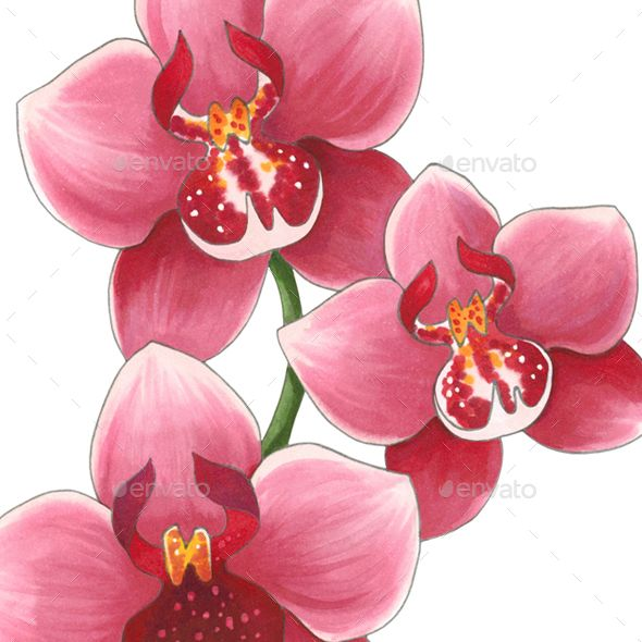 Orchid Flowers Orchid Flowers Orchids Buy Orchids Flowers