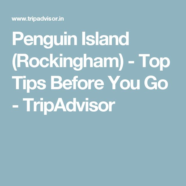 Penguin Island (Rockingham) - Top Tips Before You Go - TripAdvisor