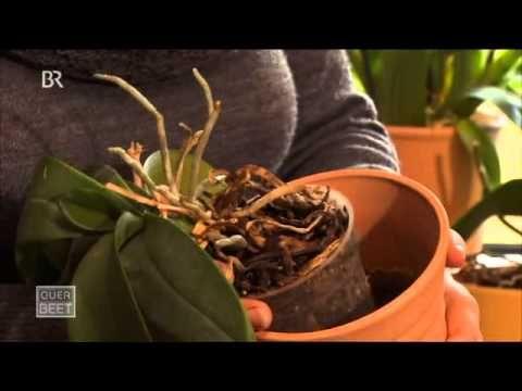 Neujahrskur für Orchideen - Querbeet, 14.01.2012, BR - YouTube