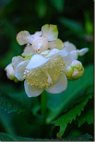 348 best giardino in ombra images on Pinterest Gardening Plants
