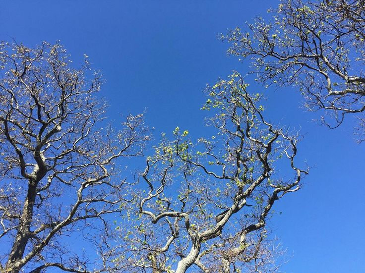 when you look up, skies, skyfie, sky, tree branches, nature, photography, cape town, south africa