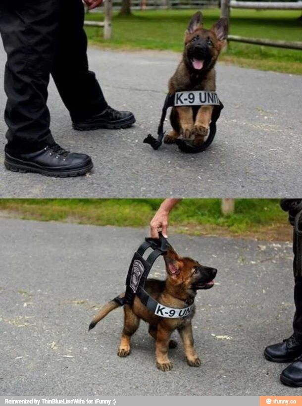 Adorable little police pup!