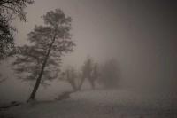 Notte d'inverno  Autore: ProgettoNatura