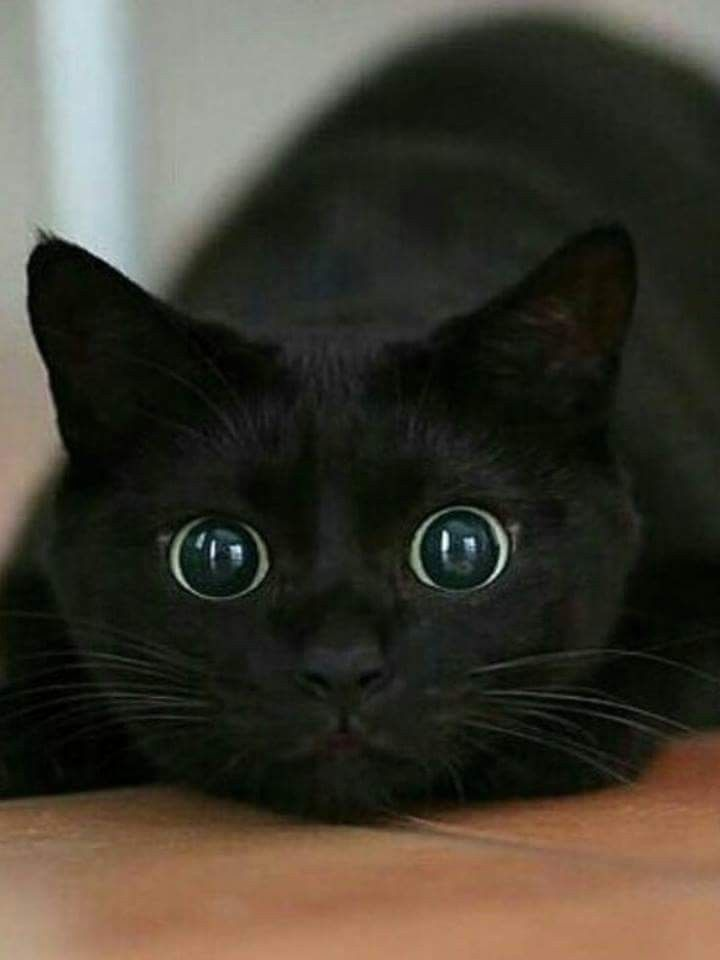 Lol This Is Me When I See You Always Have My Eyes All On You And My World Is Literally Stopped Catbreeds Baby Katzen Katzen Babytiere