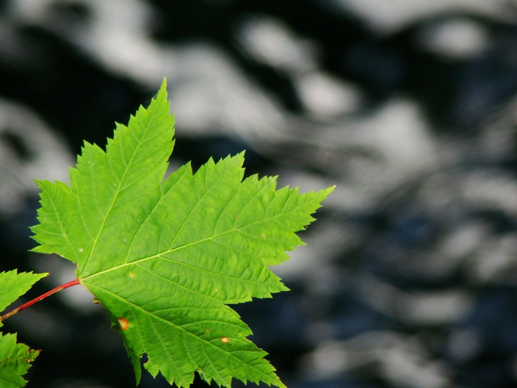 Leaf over water.