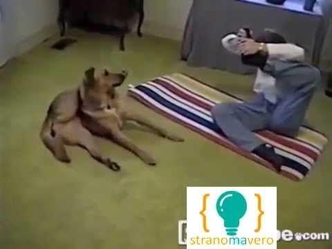 Il cane che insegna yoga ! - http://www.stranomavero.xyz/animali-bestiali/il-cane-che-insegna-yoga.html