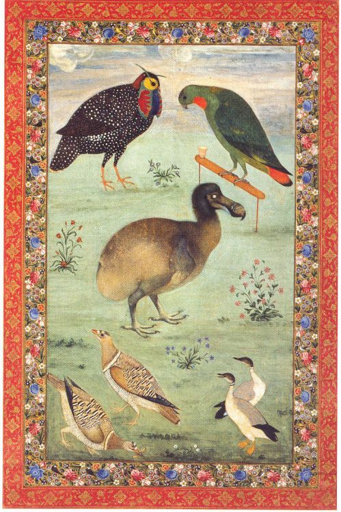 Painting of the Dodo by Mansur India, Mughal, 1610 - 1625 Via: All things Nancy loves