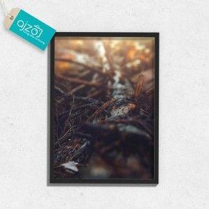 Plakat w ramie Spróchniałe drzewo   50x70cm