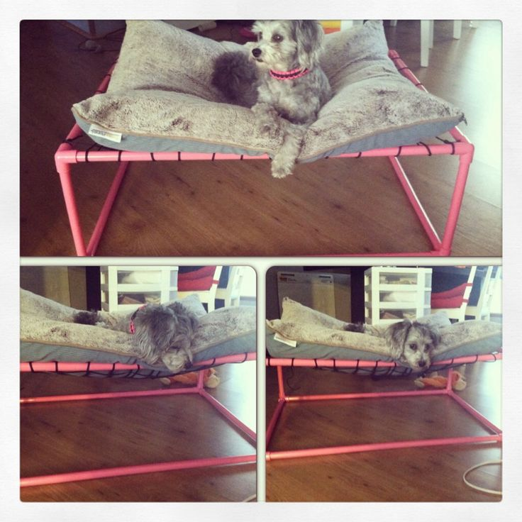 18 best images about ideas for the dogs on pinterest for Pvc cat bed