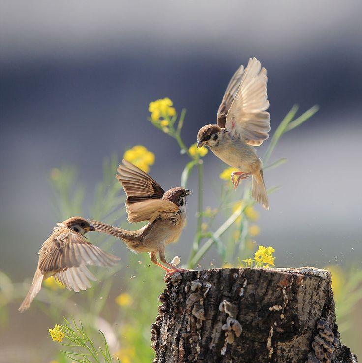 Sparrow (참새) by Lim yangmook on 500px
