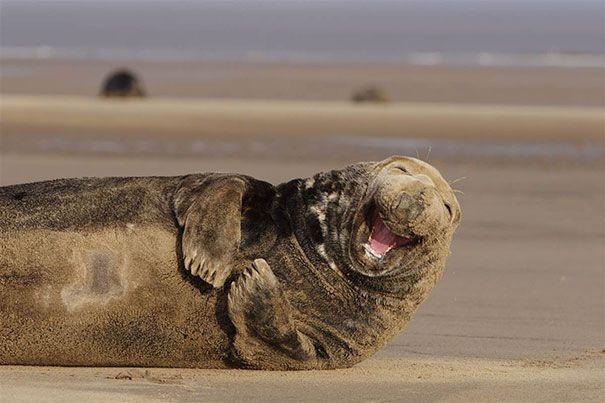 animales-con-sonrisa (7)