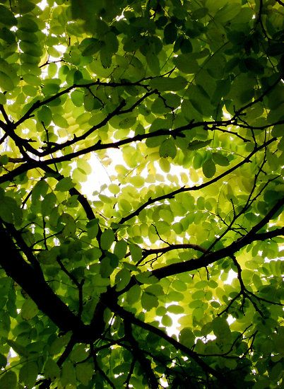 Tree canopy -- I used to look up through the leaves and I would think of God looking down. When I saw the rays come through the clouds I thought that was his throne. I thought about God a lot, and I knew that He was the BEST person in the whole universe. I especially loved his trees.