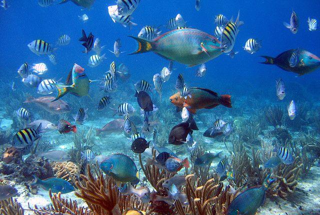 Cozumel, Mexico. I've snorkel end in Tahiti, Fiji, Hawaiian islands, Puerto Vallarta  and nothing compared to Cozumel!! Loved it!