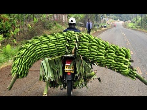 How it's made – Harvesting Papaya Banana Cherries Modern Agriculture Technology 2018 Farming – YouTube