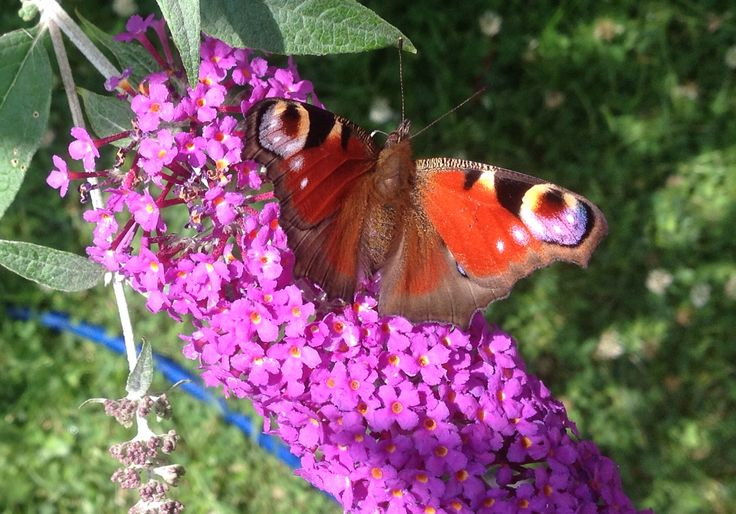 I took this, it was in my garden