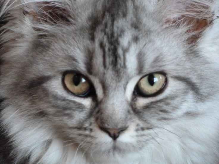 '... kattenogen...'