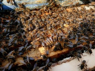 How to Kill Wax Moths in Bee Hives