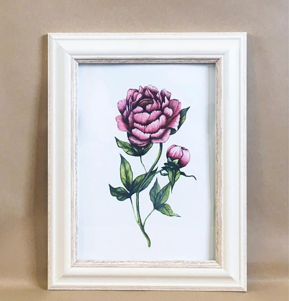 Fine art giclee print of my original pink peony illustration Original artwork painted myself using watercolour on 300gsm watercolour paper Inspired by botanical, vintage style illustration Archival quality print on 300gsm high quality paper High standard of print to ensure