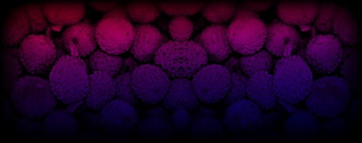 Digital Art : Colour Collective