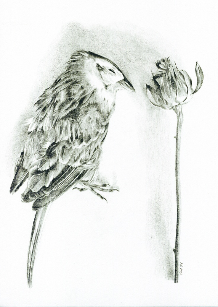 yellowhammer bird coloring pages - photo #15