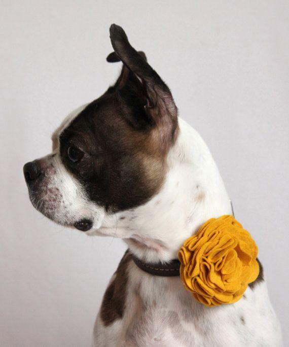 Large Rosette Felt Flower Dog Collar by LittleBlueFeathers on Etsy, $12.75Bourb Collars, Dog Collars, Etsy, Dogs Collars, Collars Accessories, Flower Fake, Rosette Felt, Flower Dogs, Felt Flowers