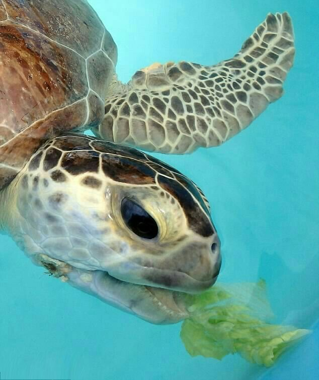 25 best ideas about pet turtle on pinterest turtles