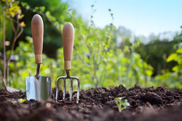 Gardening is a wonderful hobby which makes us feel delightful and full of bliss along with an opportunity to bond with nature. Planting a sapling and waiting for that special day for it to bloom with fragrance is just wonderful and out of the world feeling