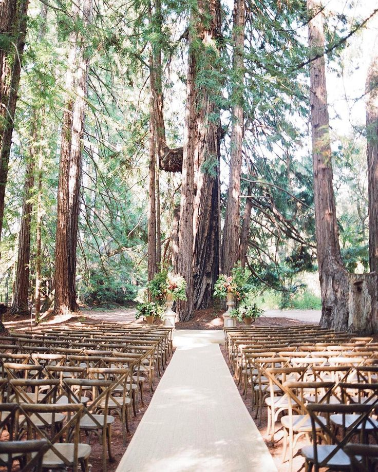 Wedding Altar Branches: 2316 Best Images About OUTDOOR WEDDING CEREMONY, AISLE