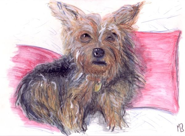 Drawing of Paddy, Yorkshire Terrier.  Created using watercolour pencils. #dog #dogs #Yorkshire #terrier #art #artwork #artist #pet #portrait