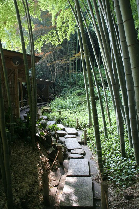 Bamboo gardens at the 600 year old temple in Kamakura.